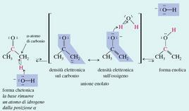 Enolizzazione dell'acetone (pKa 19) promossa da basi. Fonte: Seyhan Eğe, La Chimica Organica Essenziale, Idelson-Gnocchi, 2008