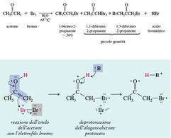 Reazione dell'acetone con bromo e suo meccanismo. Fonte: Seyhan Eğe, La Chimica Organica Essenziale, Idelson-Gnocchi, 2008