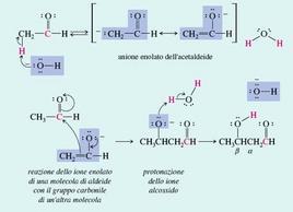 La condensazione aldolica. Fonte: Seyhan Eğe, La Chimica Organica Essenziale, Idelson-Gnocchi, 2008