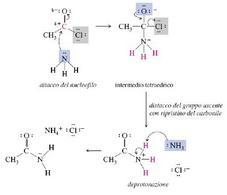 Es. di Sostituzione Nucleofila Acilica. Fonte: Seyhan Eğe, La Chimica Organica Essenziale, Idelson-Gnocchi, 2008