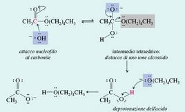 Idrolisi basica di un estere. Fonte: Seyhan Eğe, La Chimica Organica Essenziale, Idelson-Gnocchi, 2008
