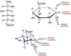 Formula prospettica di Haworth e forma a sedia del α-D-glucosio. Fonte: Seyhan Eğe, La Chimica Organica Essenziale, Idelson-Gnocchi, 2008