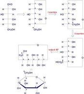 Trasformazione della forma aciclica del D-glucosio nella formula prospettica di Haworth. Fonte: Seyhan Eğe, La Chimica Organica Essenziale, Idelson-Gnocchi, 2008