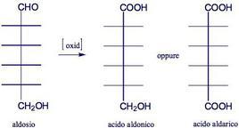 Reazioni di ossidazione di un aldoso. Fonte: Seyhan Eğe, La Chimica Organica Essenziale, Idelson-Gnocchi, 2008