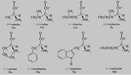 Amminoacidi con gruppi R non polari e che presentano carica netta a pH fisiologico. Fonte: Seyhan Eğe, La Chimica Organica Essenziale, Idelson-Gnocchi, 2008