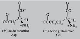 Amminoacidi che presentano una carica netta negativa a pH fisiologico. Fonte: Seyhan Eğe, La Chimica Organica Essenziale, Idelson-Gnocchi, 2008