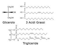 Struttura dei trigliceridi