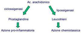 Sintesi e ruolo dei derivati dell'acido arachidonico