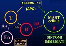 Richiamo di cellule nel focolaio infiammatorio
