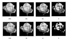 Quantizzazione di immagine da 8 fino ad 1 bit.  L'uso di 1 bit risulta in una quantizzazione su due livelli: bianco e nero.