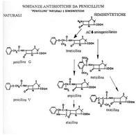 Struttura chimica di penicilline naturali e semisintetiche.