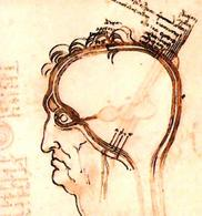 Leonardo da Vinci, The layers of the scalp compared to an onion, and other studies