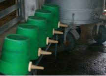 Mangimi liquidi a base di latte o derivati del latte.Fonte: 30giorni il mensile del medico veterinario