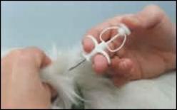 Applicazione del microchip (particolari) Immagine tratta da  Cani e gatti