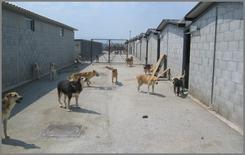 """Area di """"Sguinzagliamento""""dei cani, costruita in asfalto"""