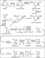 La glicolisi, un processo metabolico