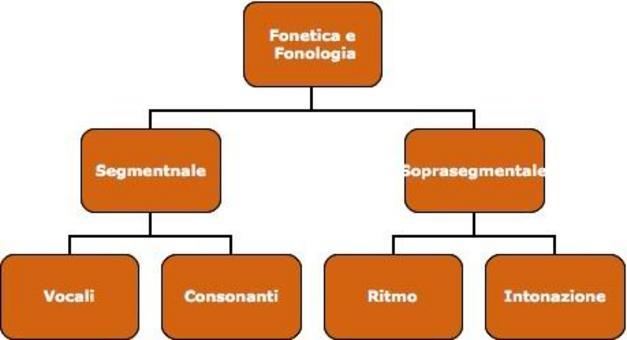 La fonologia e la fonetica hanno la stessa articolazione interna. In questa lezione non tratteremo gli aspetti soprasegmentali.