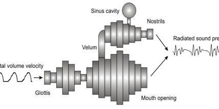 Immagine da:Vocal Tract Lab.