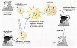 Clonazione mammifero adulto con nucleo transfer [Dolly]