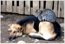 Gato encima de un perro