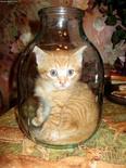 Gato dentro de una botella