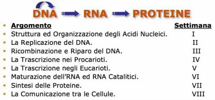 """Il """"dogma centrale"""" della Biologia Molecolare"""