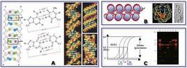Struttura degli Acidi Nucleici