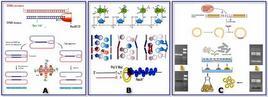 Ricombinazione e Riparo del DNA
