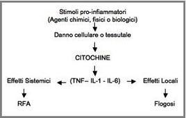Grafico 1: link tra stimoli pro-infiammatori, liberazione di citochine, RFA e flogosi.