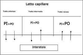 Le frecce indicano la direzione del flusso di liquido da e verso l'interstizio.