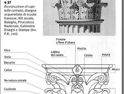 Capitello corinzio: nomenclatura