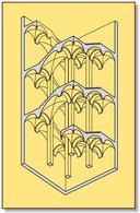 Scala aperta napoletana. Pianerottoli coperte da volte a crociera e rampe da crociere rampanti. Fonte: Disegno di R. Catuogno