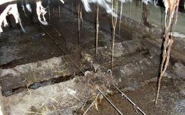 Esempio di condizioni igieniche scarse in un allevamento cunicolo.