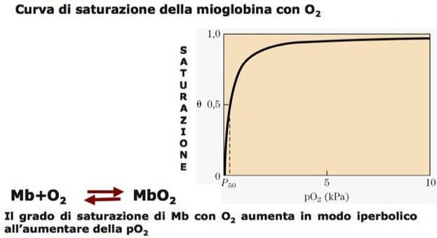 """Tratta da: DL Nelson e MM Cox """"I Principi di biochimica di Lehninger"""" ed. Zanichelli."""