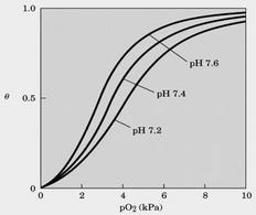 """Tratto da: DL Nelson e MM Cox """"I Principi di Biochimica di Lehninger"""" ed.Zanichelli."""