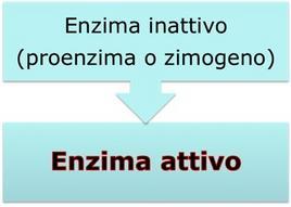 Regolazione attraverso proteolisi limitata irreversibile.