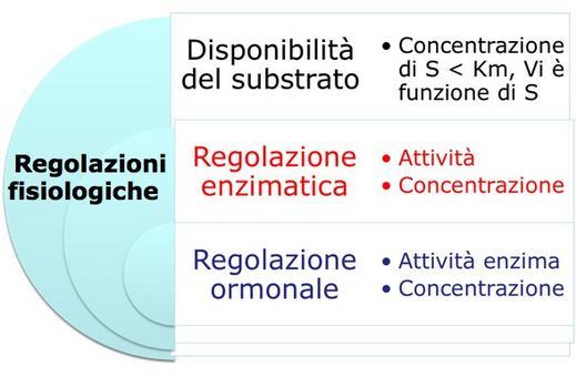 Diversi livelli di regolazione, interni ed esterni alla cellula, delle vie metaboliche. Immagine autoprodotta.