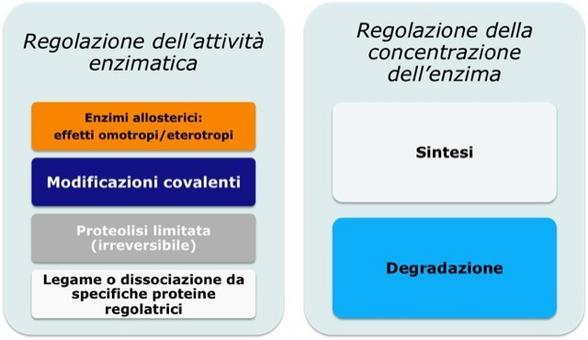 Principali meccanismi di regolazione enzimatica delle vie metaboliche. Immagine autoprodotta.