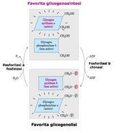 """Tratto da: DL Nelson e MM Cox """"I Principi di biochimica di Lehninger"""" ed. Zanichelli."""
