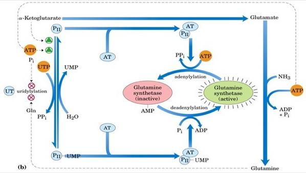 """Tratto da DL. Nelson & MM. Cox """"I principi di biochimica di Lehninger"""" Ed. Zanichelli."""