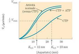 """Regolazione dell'aspartato transcarbamilasi batterica. Tratto da: DL Nelson e MM Cox """"I Principi di biochimica di Lehninger"""" ed. Zanichelli."""