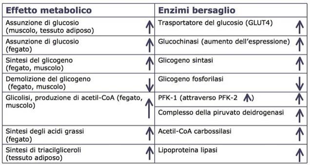 Effetti dell'insulina sulla concentrazione di glucosio nel sangue:     assunzione del glucosio da parte delle cellule e sua trasformazione in depositi di glicogeno e trigliceridi.