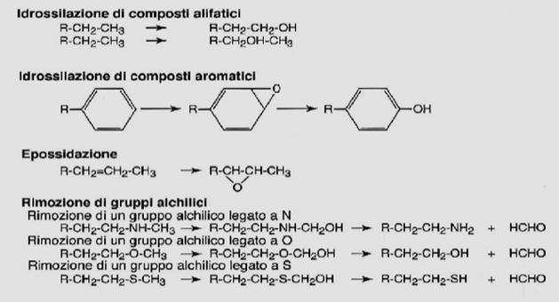 """Tratto da: Siliprandi, Tettamanti  """"Biochimica Medica"""" ed Piccin."""