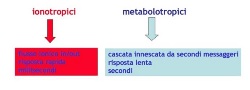 Classificazione dei recettori per i neurotrasmettitori.