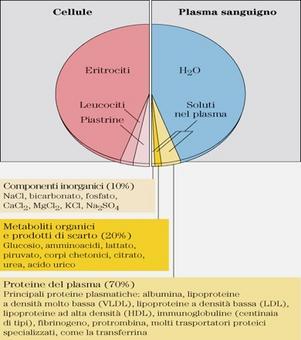 """Componenti del sangue. Tratto da: DL Nelson e MM Cox """"I Principi di biochimica di Lehninger""""  ed. Zanichelli."""