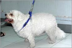 Cane in condizione corporea di evidente sovrappeso.