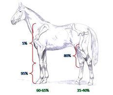 Distribuzione approssimativa delle zoppie nel cavallo.