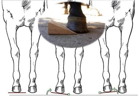 Cuneo con apice rivolto verso il quarto interno o esterno: tensione sui legamenti collaterali dell'interfalangea distale e dell'apparato di sospensione del navicolare.