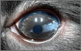 Area di depigmentazione dell'iride nel cane.