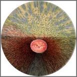 Cavallo: Immagine schematica del fondo dell'occhio.